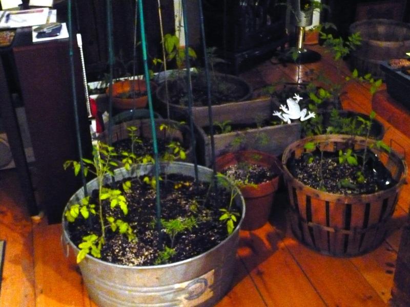 indoorgarden1