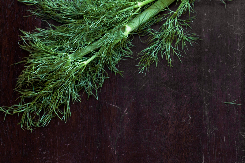 fennel-frond