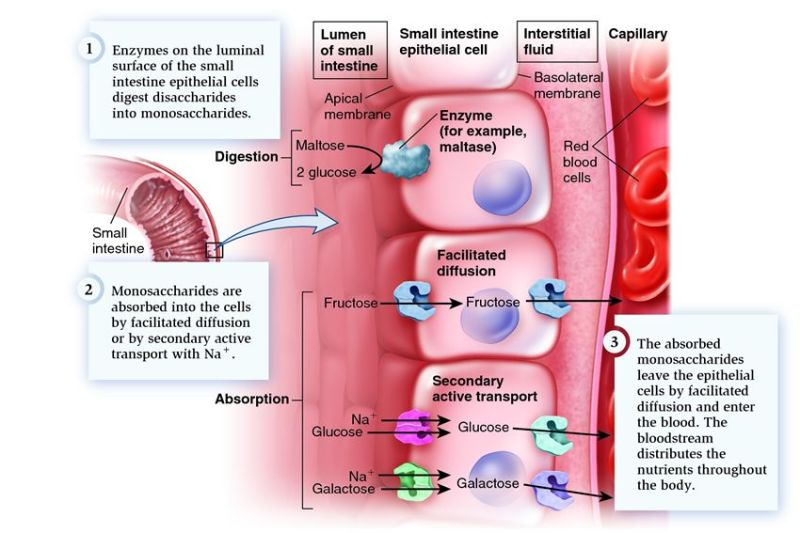 Graphic from Biochemistry for Medics.