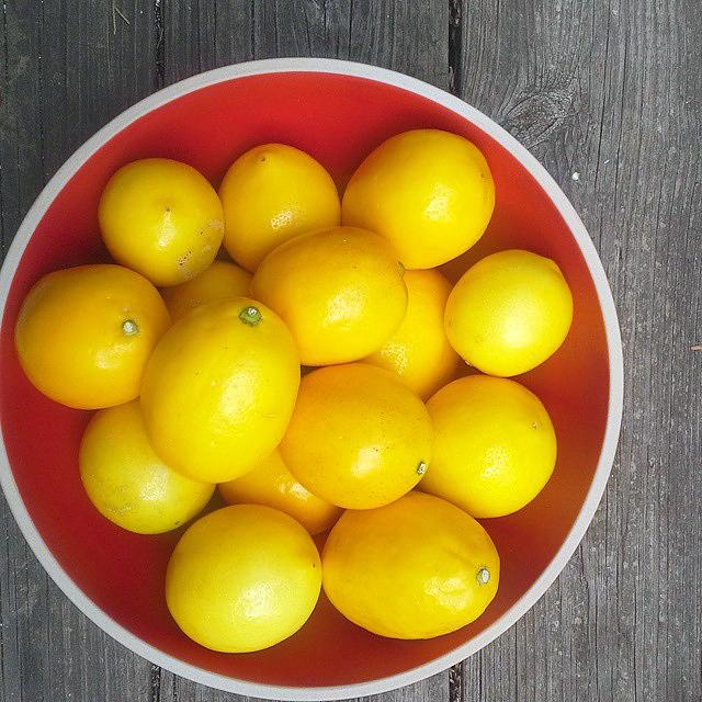lemon-ladies