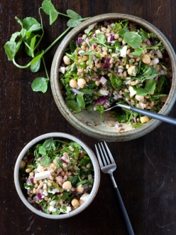 wheat-berry-salad